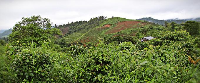 후원아동 민이 살고 있는 후엉 풍 마을은 산악 지역으로 많은 주민들이 커피를 재배하며 커피 산업에 종사하고 있다.