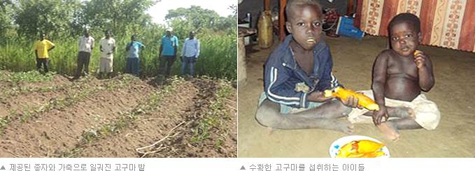(좌) 제공된 종자와 가축으로 일궈진 고구마 밭 (우) 수확한 고구마를 섭취하는 아이들
