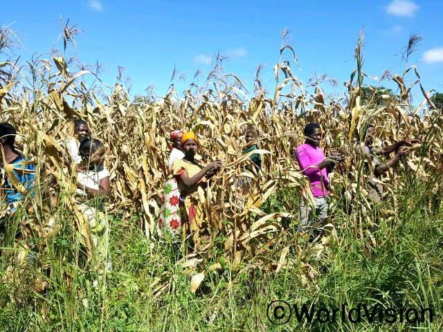 농부들이 밭에서 추수를 하고 있습니다. 수확한 농작물을 이용하여, 이제 농부들은 충분한 식량을 저축하고, 아이들의 식사도 개선하고, 또 작물을 판 돈으로 아이들과 가정에 필요한 물건을 살 수 있게 됐습니다.년 사진