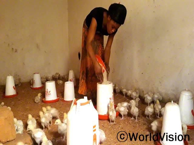 병아리에게 모이를 주고 있어요. 월드비전에서 닭모이와 사육하는 데 필요한 용품들을 지원해주었어요.잘 사육하고 판 덕에, 점점 닭이 많아지고 있어요.년 사진