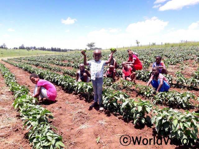 저희는 밭을 위한 울타리, 수도관, 그리고 씨앗을 지원 받았어요. 이제 저는 매일 아침 밭에 나가서 채소를 따와요. 그것으로 엄마가 건강한 음식을 만들어 주셔서 행복해요. -시미로(12세, 서 있는 아동)년 사진