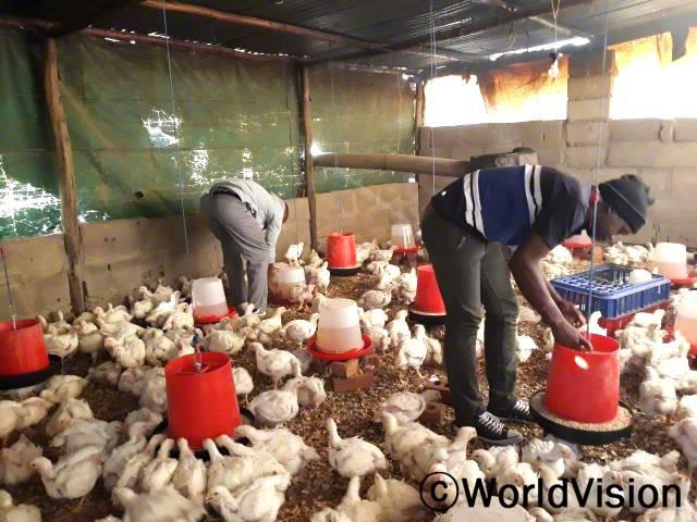 청년들이 자금을 지원 받아 닭 사육을 합니다. 수입이 점점 증가하고 있어서 가정 생계에도 보탬이 되고, 생활 수준도 많이 향상되었습니다.년 사진
