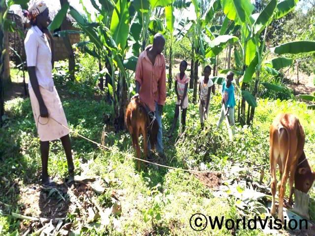 """""""저는 가축 사육 훈련을 통해 처음에 닭을 키우기 시작하여 지금은 소도 키울 수 있게 되었습니다. 올해는 특별히 100개의 바나나 나무 묘목을 심었는데 내년에 풍성하게 수확하기를 기대하고 있습니다."""" -마크(45세)년 사진"""