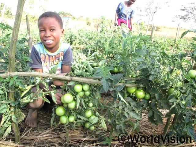 """""""올해 토마토를 많이 수확했어요. 저희 가족이 먹기도 하고 남은 것들은 마을 시장에 팔아서 수익을 많이 얻었어요."""" -피터(11세). 월드비전은 농림부와 공동으로 농부들을 대상으로 원예작물 농사법에 대한 교육을 실시하고 있습니다.년 사진"""