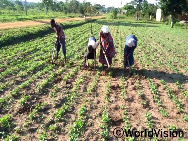 교육을 들으면서, 곡식을 줄 맞춰 심는 법과 잡초 뽑는 법을 배웠어요. 줄 지어 심은 땅콩이 아주 잘 자라고 있어요. -아쉬아(오른쪽에서 두 번째)년 사진