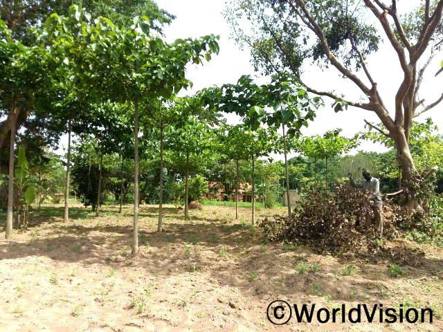 저희는 환경보호 목적과 바람을 막기 위한 용도로 튼튼한 나무 묘목들을 지원받았어요. 이 나무들이 완전히 자랄때 쯤이면 저희도 각자 가족들을 더 잘 부양하게 되겠죠. -아이삭(농부)년 사진