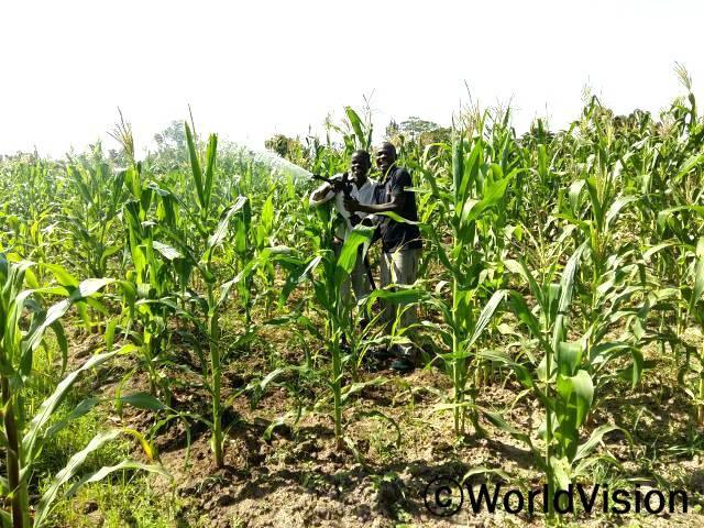 농부들은 월드비전의 농업교육을 받아 밭과 농작물을 효율적으로 관리하는 법을 배웠습니다.