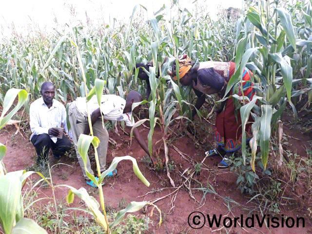 후원자님의 도움으로 농업기술 교육을 받았어요. 덕분에 여러 가정에서 옥수수 수확량이 크게 늘어, 식품 생산량과 판매량도 좋아졌어요. 수익은 가족 생계에 도움이 되고, 특히 아이들 학교 생활에 큰 도움이 돼요. -페르난도(주민)년 사진