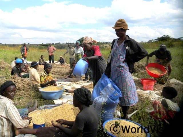 키쿨라 프로그램의 지원으로 재배한 콩을 수확하는 Saing Joseph 의회의 구성원들년 사진