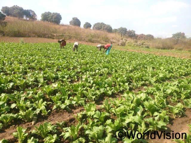 아동들이 텃밭에서 부모님을 도와 잡초를 제거하고 있습니다. 월드비전은 부모들에게 괭이와 종자 같은 농사 재료를 지원했습니다.년 사진