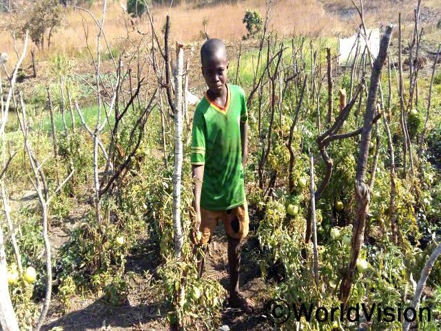 이 토마토밭은 저희 가족을 위한 곳이에요. 저희 부모님은 수확물을 팔아서 저를 학교에 보내세요. -폴(13)년 사진