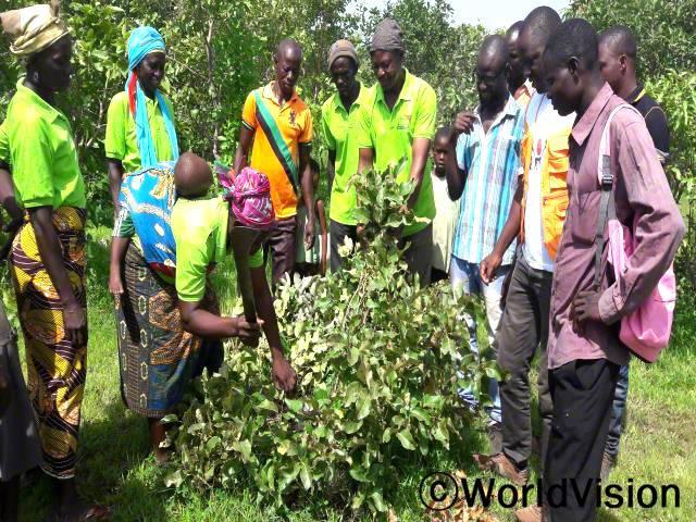 지역사회 5곳의 농부 리더 20명이 모여, 묘목이 큰 나무가 될 때까지 어떻게 잘 길러야 하는지 농업 기술 교육을 받았습니다.년 사진
