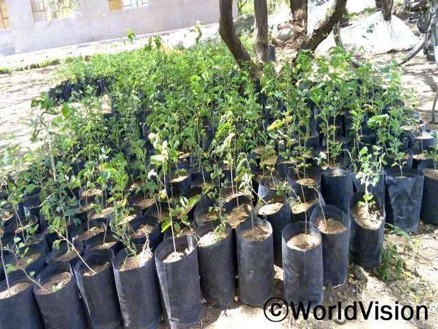 환경 보전을 위해 우리 사업장은 나무 파종원을 설립하고 캉지덴드 초등학교, 에야시 및 캉지덴드 중등 학교의 5 개 학교 내에서 나무를 심는 운동을 해왔습니다. 나무 심기 덕분에 이전과 비교하여 주변 전경이 바뀌었습니다.년 사진
