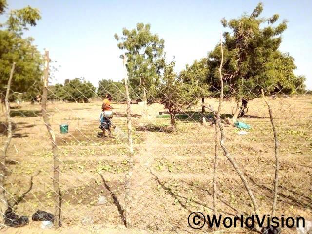 지역사회에서 여성그룹이 채소텃발을 가꾸는 활동을 하고 있습니다. 농작물을 팔고 돈을 모아 훗날 가정을 부양하는데 사용합니다.년 사진