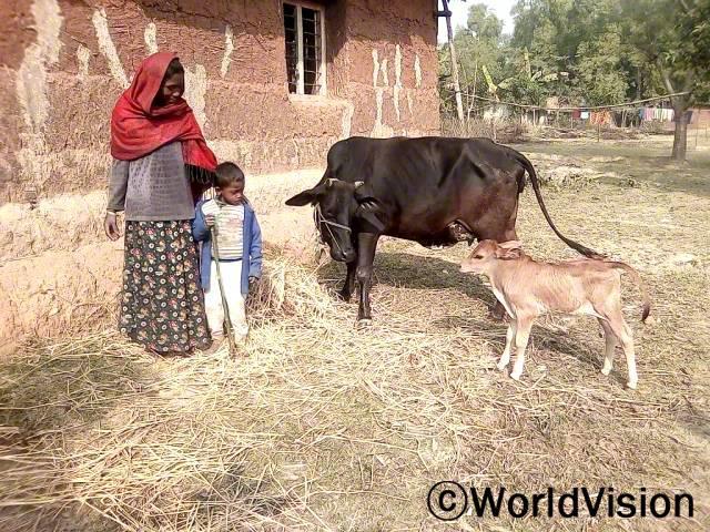 저는 소 키우는 법을 배우고, 소도 지원받아 우리 가족의 수입이 늘어나게 되어 매우 감사해요. 우리 소는 벌써 송아지도 낳았답니다. -타라비(엄마)년 사진