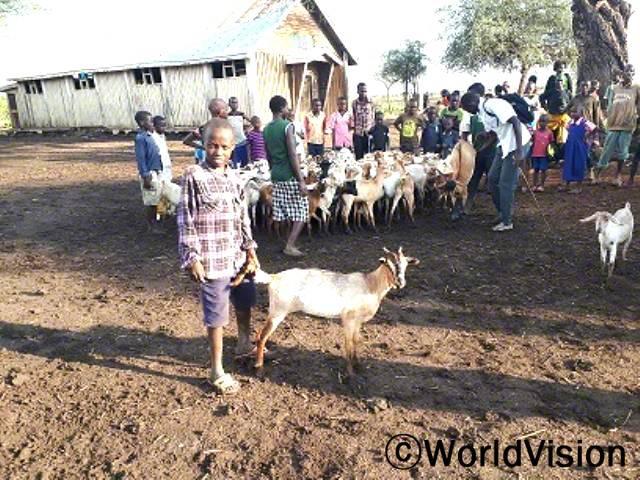마을에서 가축은 정말 중요해요. 가축이 없으면 아이들은 영양실조에 걸릴 수밖에 없고 삶이 힘들어져요.월드비전에서 마을 가정당 3마리의 염소를 지원해준 덕에 생계를 유지하고, 아이들도 우유를 마시면서 건강하게 지내고 있어요. - 론예잇년 사진