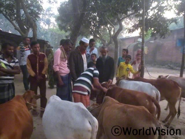 월드비전 방글라데시 디나즈푸르 사업장은 취약 계층 가정들의 수입 증대와 아이들 지원을 위하여 각 가정에 소를 지원해 주었습니다.년 사진