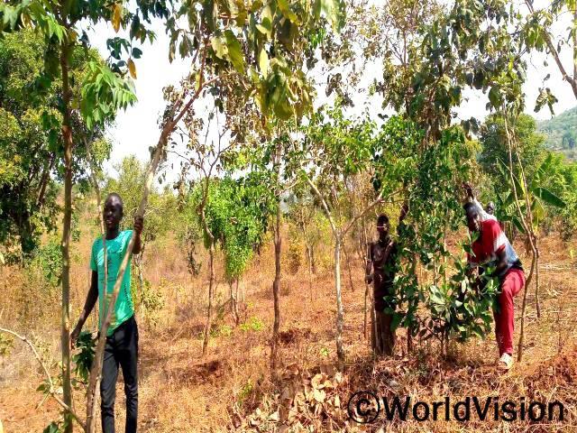 """""""전에는 토양 침식으로 인해서 농사 짓기가 힘들었는데 월드비전의 도움으로 논밭에 나무를 심어 농작물을 보호할 수 있게 되었습니다."""" -베나드(37세)년 사진"""