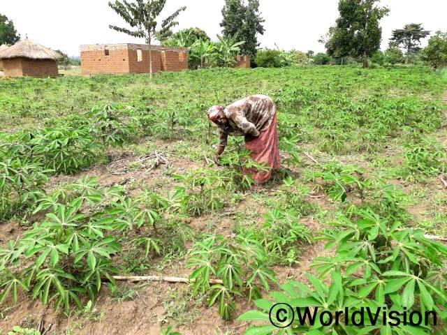 """월드비전은 마을 주민들을 대상으로 농업 생산량을 늘리기 위한 농업 교육을 실시하였습니다. """"저희는 이번에 대규모의 카사바 나무를 심었어요. 카사바 나무가 다 자랐을 때쯤 시장에 내다팔아 아이들 양육비로 사용할 거랍니다."""" –플로렌스(농부)년 사진"""