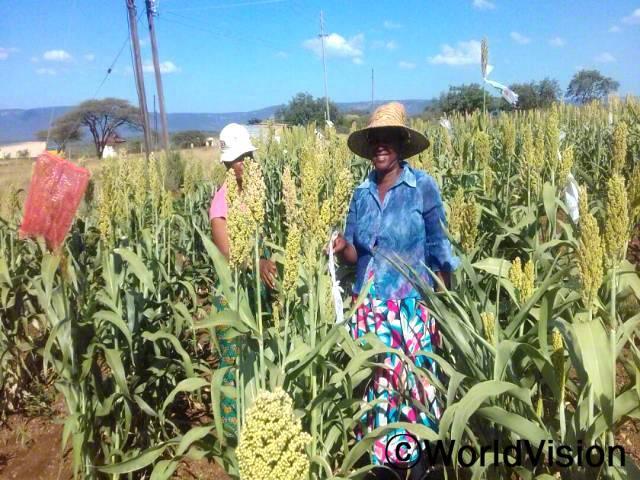 농작물 재배가 우리 가족의 유일한 소득원인데, 가뭄으로 인해 추수량에 영향을 받았어요. 이제 가뭄을 견딜 수 있는 작물 재배 방법을 배우게 되어, 가족들을 지속적으로 부양할 수 있어요. 시봉질(파란색 셔츠를 입은 농민)년 사진