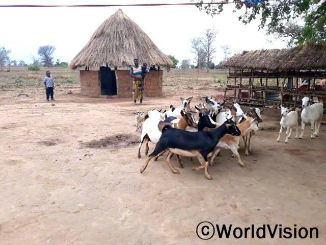 월드비전에서 염소를 지원해주고 사육 및 가축질병관리 교육을 실시해 준 덕에, 사육을 잘할 수 있었어요.지금은 염소가 많아져서 판매를 하면서 생계를 유지하고 있어요. - 리스터(37세, 축산업자)년 사진