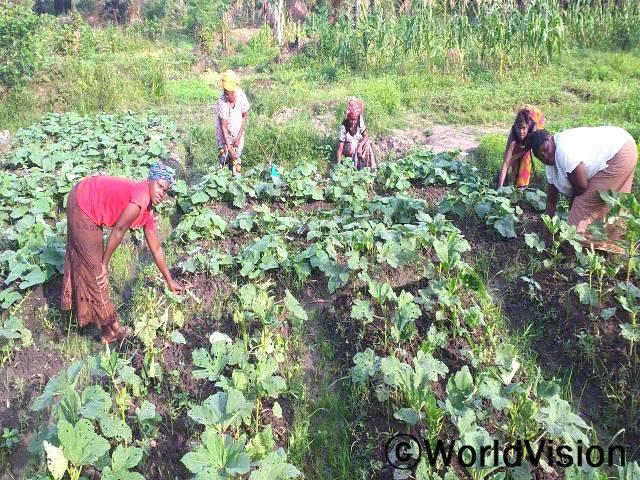농업 교육을 받고 고지대에서 논농사 지어 수입을 낸 지역 소득증대모임은 꾸준히 농사를 해나가고 있습니다. 농사로 번 수입으로 아이들 영양을 챙기고, 남편을 도와 가정 생계를 꾸립니다.년 사진