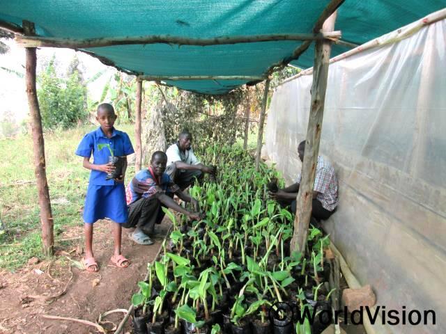 """월드비전은 식량안보사업의 일환으로 개량 바나나 생산을 늘리기 위해 지역 주민들에게  바나나 씨앗을 나누어주었습니다.이는 가정 내 소득증대를 불러와 삶의 질을 개선시켜 줄 것입니다. """"이 바나나 씨앗은 품종이 좋아서 큰 바나나로 자랄 거예요."""" 수혜가정의 가장인 피터씨(30세)는 말했습니다.년 사진"""