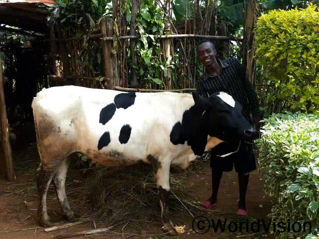 취약계층 가족들이 젖소를 지원받았습니다.  젖소를 주신 월드비전에게 감사합니다. 농업 생산에 사용할 거름도 충분하고, 우리가 마시기에도 충분한 우유를 얻게 되었어요.  존(22세)씨의 말입니다.년 사진