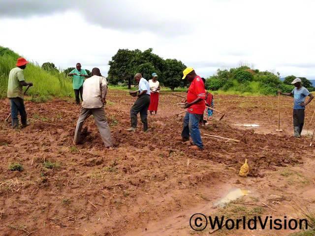 주민들이 콩을 심고 있습니다.년 사진