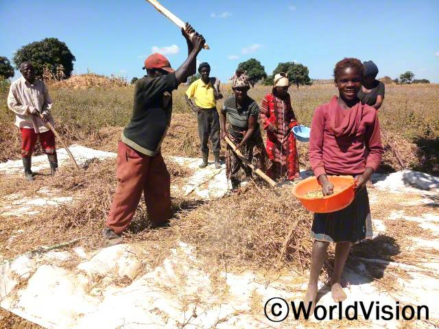 주민들이 콩 수확을 하고 있습니다.년 사진