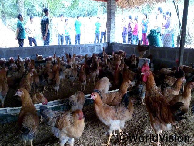 생계개발그룹의 구성원들이 서로를 방문하고 닭을 사육하는 방법에 대한 경험을 공유하였습니다. 그 후에, 구성원들은 더 나은 사육방식을 가질 수 있게 되었고, 경제수준도 향상시킬 수 있었습니다.년 사진
